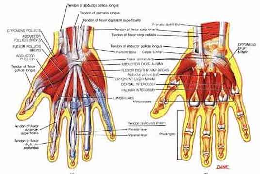 Carpel tunnel syndrome treated by Vancouver Chiropractors at Vitality Clinic