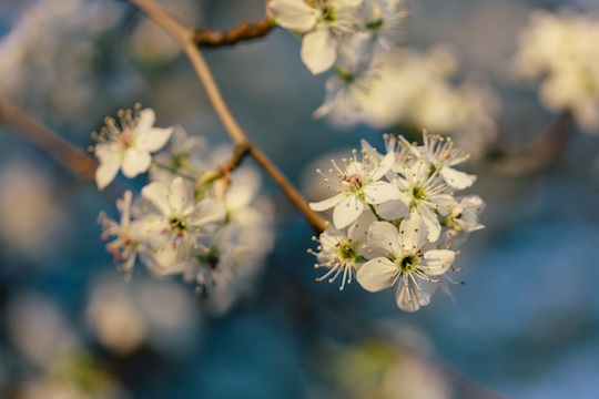 Allergy Testing, Treatment, and Tips Provided by Vancouver Naturopath